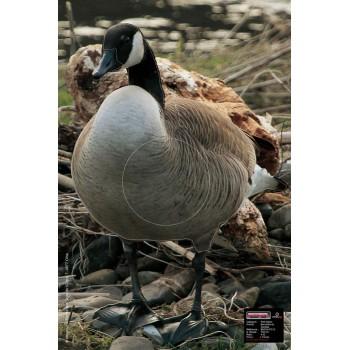 Blason Petit Gibier Canadian Goose Alert
