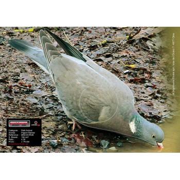 Blason Birdy Pigeon